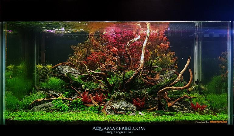 Аквариуми по поръчка от AquaMakerBg.com