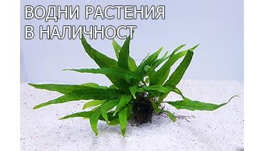 Водни растения